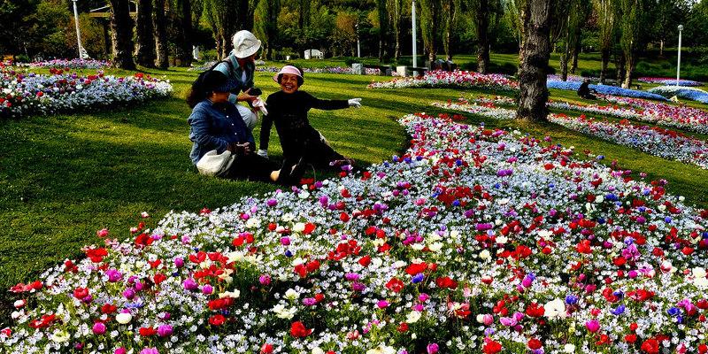 Types of Gypsum Employed for Gardening