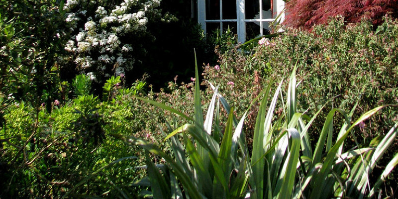 Great Lakes Gardener's June Checklist